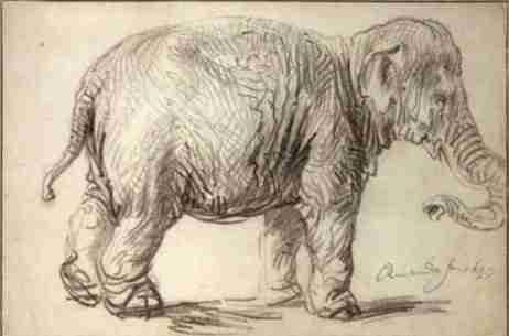 Remrandt van Rijn de olifant