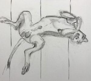 Rocker, onze hond schilderen. Hier de eerste opzet met houtskool getekend