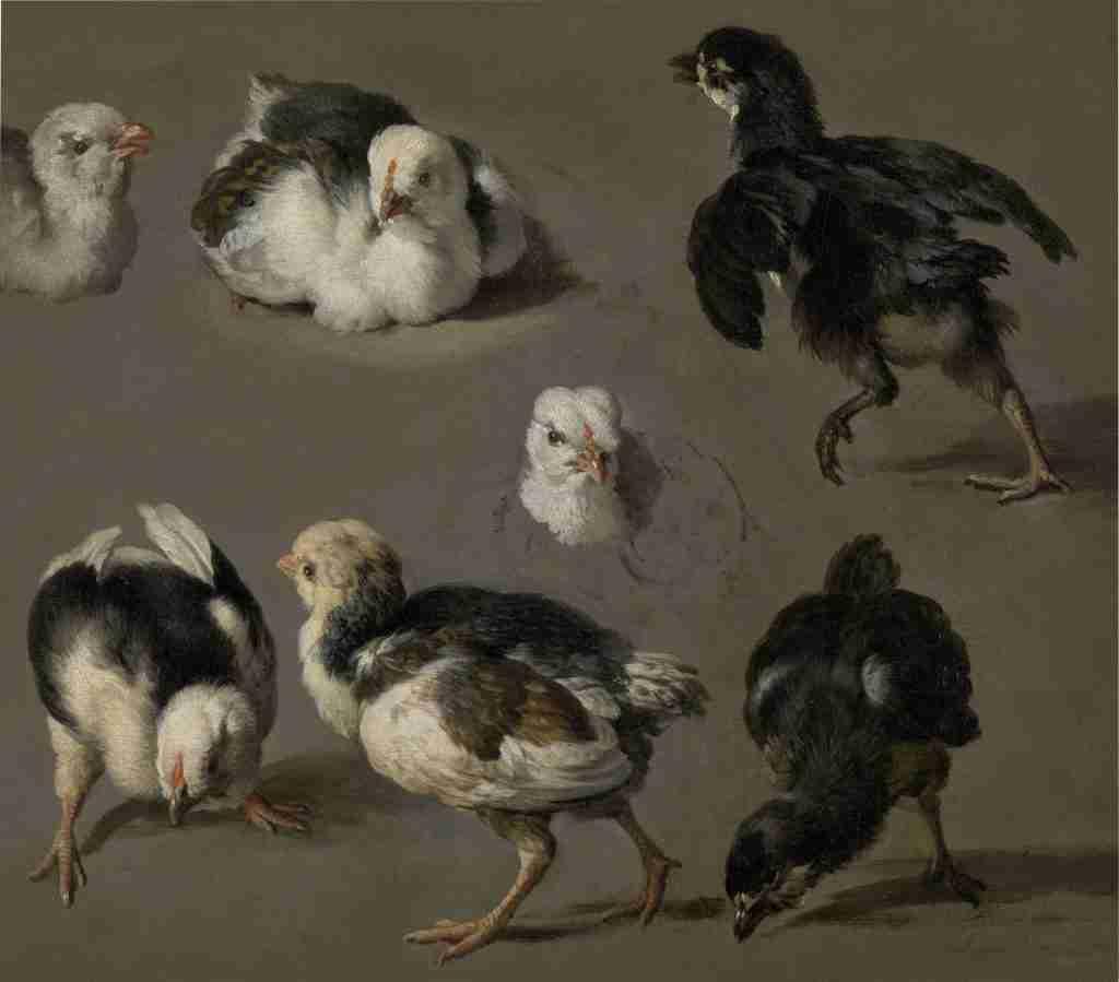 Kuikens schilderij van Melchior d'Hondecoeter